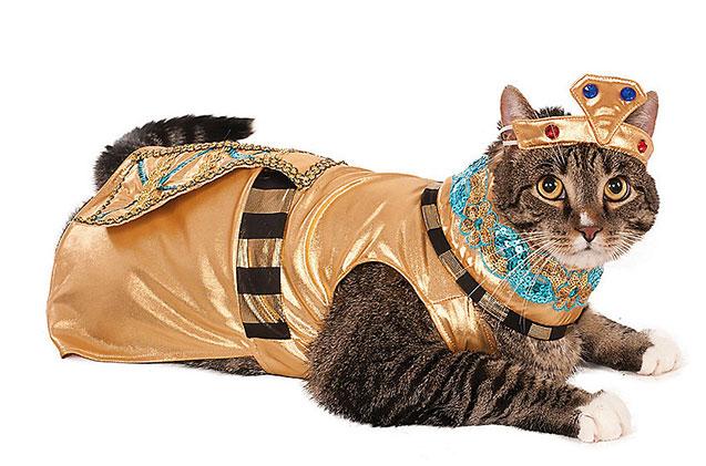 cat as egyptian queen