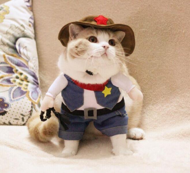 cat as sherif