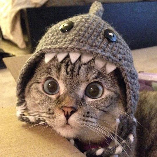 cat wearing shark costume